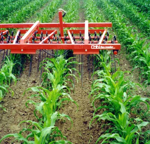 Weed control in corn